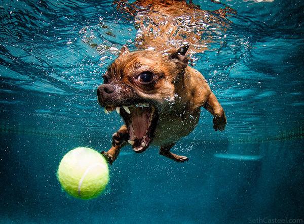 dogs-underwater-seth-casteel-10