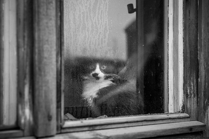 cat-black-and-white-photography-10