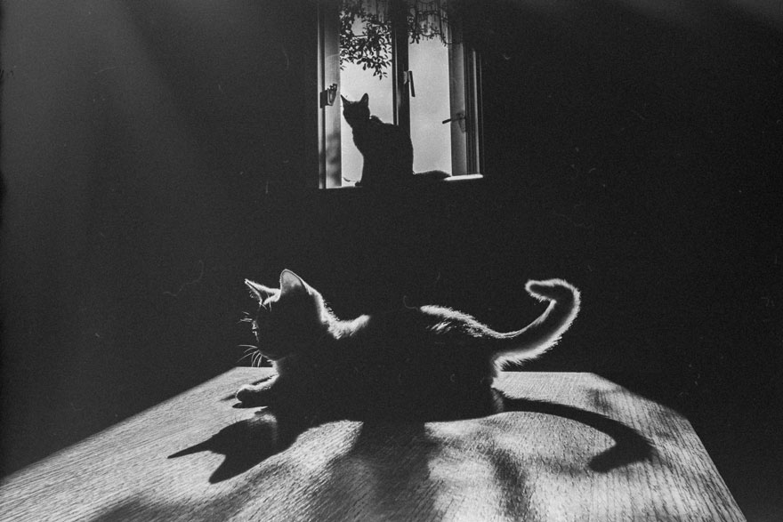 cat-black-and-white-photography-21