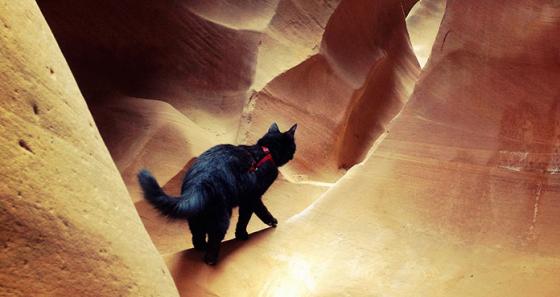 millie-climbing-cat-craig-armstrong-191