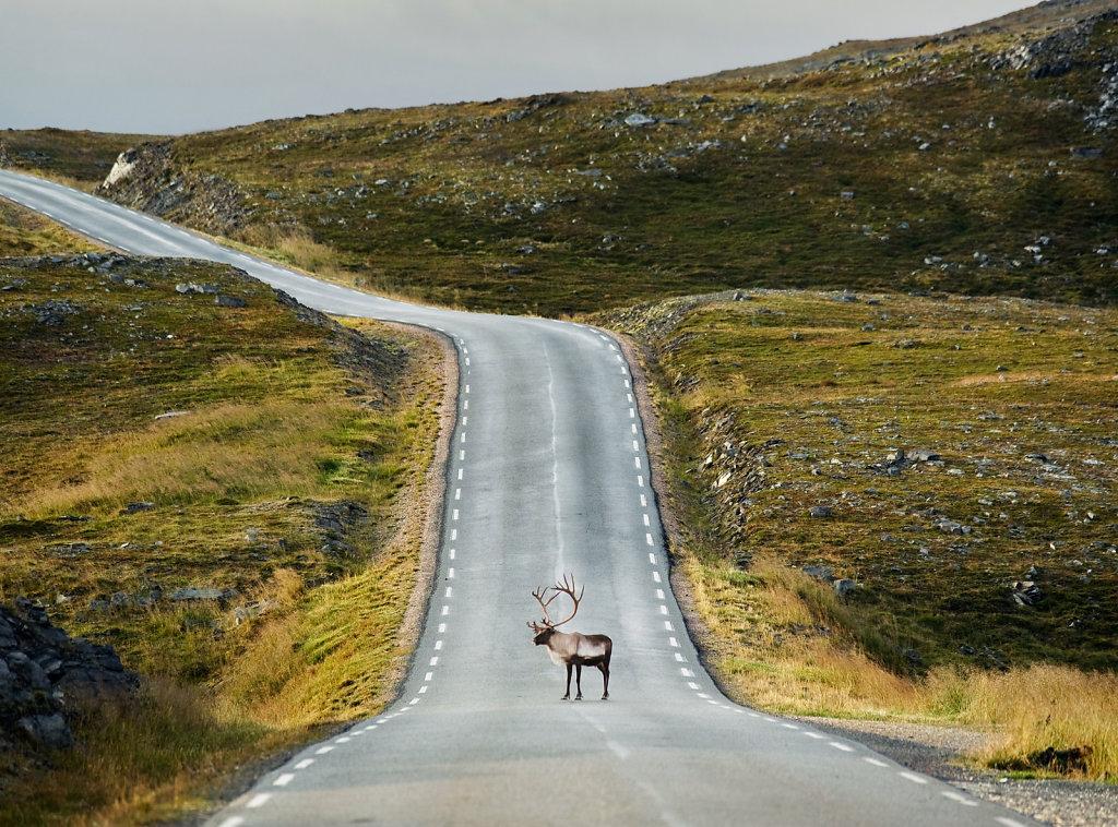 Reindeer Road