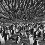 I'm from here: the amazing photos of Sebastião Salgado