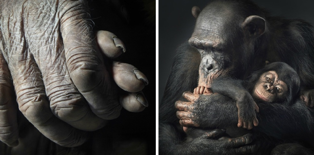 More-Than-Human-Tim-Flach-7