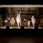 Not your usual family picture: portraits of farm animals
