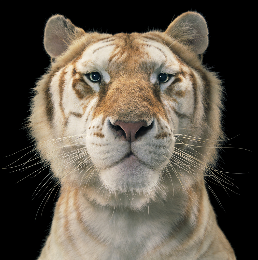 tim_flach_opiom_gallery_334_2