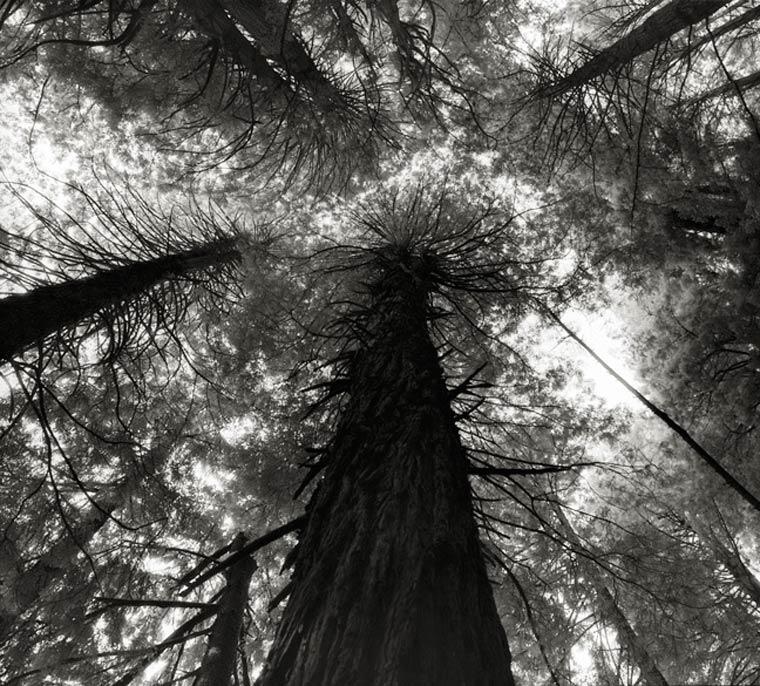 beth-moon-ancient-trees-10