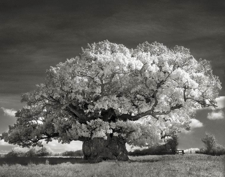 beth-moon-ancient-trees-14