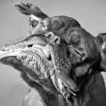Messy, wet and funny: unusual images of dogs shaking their heads