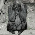 No place to call home: the sadness of animals in the zoo