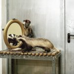 The stuffed employees: photos behind the scenes of the natural history museum in Vienna
