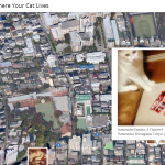 I know where your cat lives!