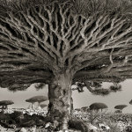 Beyond time: photos of some of the oldest trees out there